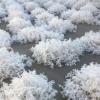 [源头厂家]河北组合填料 环保填料水处理填料易挂膜 效果好 现货